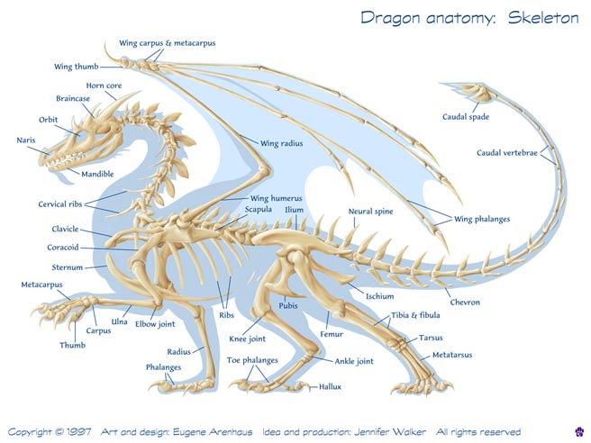 Guest Post Curiosity Quills Dragon Physiology Vilutheril
